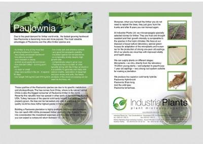 Пауловния брошура - Индустриал Плантс